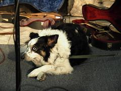 Grace 26 (sarider1) Tags: music folk acoustic smallpotatoes sanantono urbancampfires