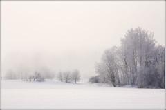 20110216. Morning. Fog. 5691. 1. (Tiina Gill (busy)) Tags: winter snow fog landscape estonia vanagram wiobw