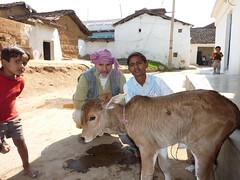 welcoming the calf (Association Devidine) Tags: india kids children village calf inde madhyapradesh adivasi theindiatree