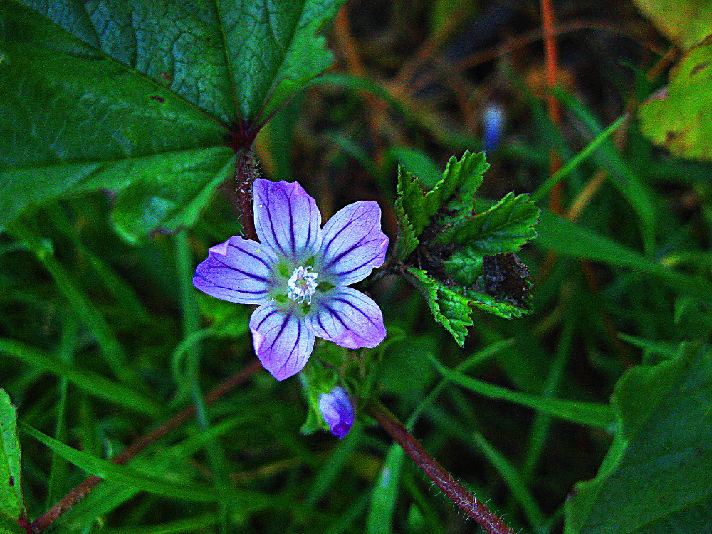 12-03-2011-flower-purple4