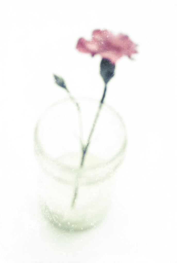 Flor para ti