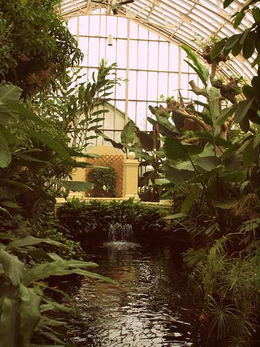 conservatory palms