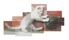 (J u l i o.) Tags: animals cat turtle felicidad