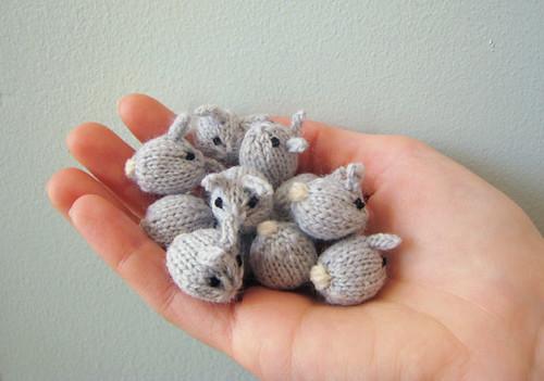 Tiny Baby Bunnies