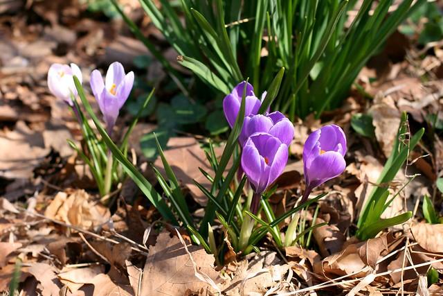 spring is springing