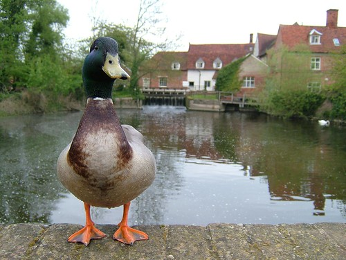 Flatford Mill 06-05-2006 by Karen Roe, on Flickr