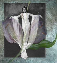 mademoiselle butterfly ... (v.sassy ..) Tags: flower texture beauty framed ziegfeld starlily scannerascamera bjortklingd magicunicornverybest selectbestexcellence magicunicornmasterpiece vsassy sbfmasterpiece sbfgrandmaster lynnesass