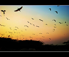 Heading back home.. its the best time of the day!! (PNike (Prashanth Naik)) Tags: blue sunset sky orange india home birds nikon dusk flight vizag vishakapatnam visakhapatnam mygearandmepremium pnike