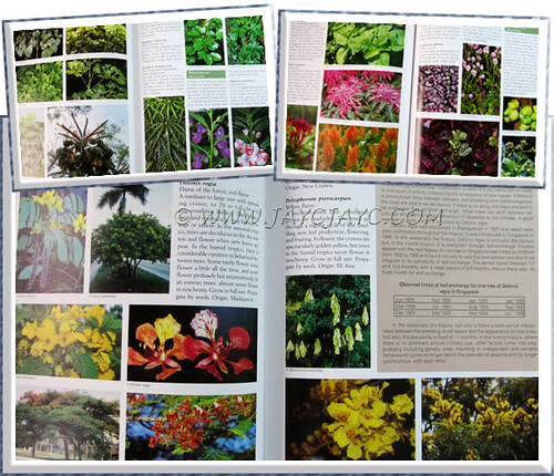 Some contents inside book titled 'Tropical Horticulture & Gardening'