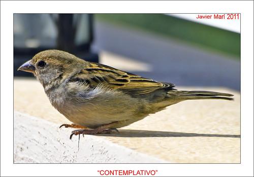 contemplativo by Javier Marí- avionseivissa