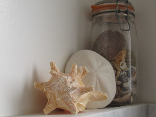 Shells above the Shower