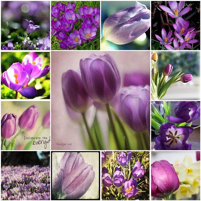Happy Purple Tuesday ~ spring done up in purple edition