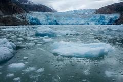 _MG_5039a (markbyzewski) Tags: alaska ugly iceberg tracyarm southsawyerglacier