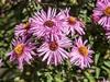 Clyne Gardens 2016 09 30 #22 (Gareth Lovering Photography 3,000,594 views.) Tags: clyne gardens botanical swansea wales flowers trees shrubs park olympus stylus1s garethloveringphotography