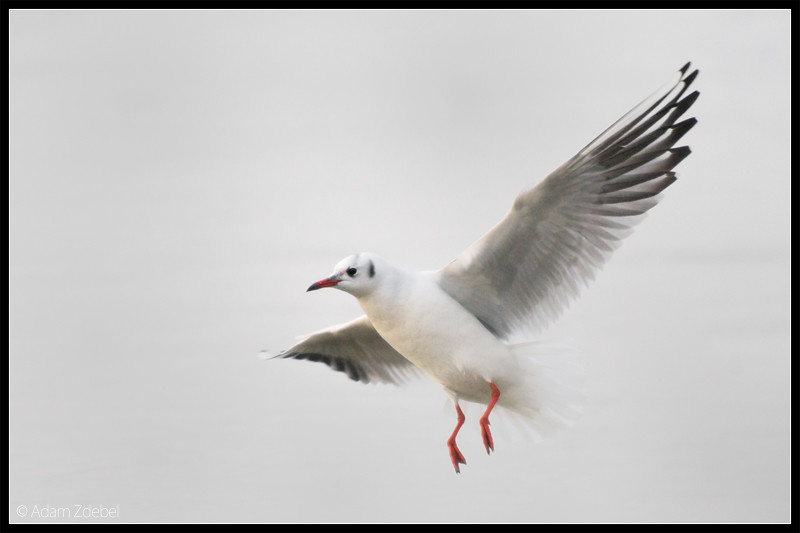 In fly