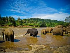 Слоны под небом