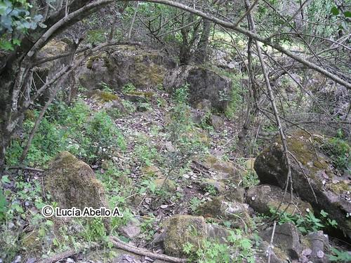 Avellanita bustillosi - hábitat