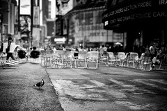 Pigeon (Philipp Klinger Photography) Tags: new york city nyc newyorkcity people urban bw white house ny newyork black bird nature animal architecture female america skyscraper buildings square fly flying blackwhite chair nikon dof chairs theatre bokeh manhattan district north broadway timessquare times taube philipp pidgeon duif klinger d700 sigma50mmf14 dcdead