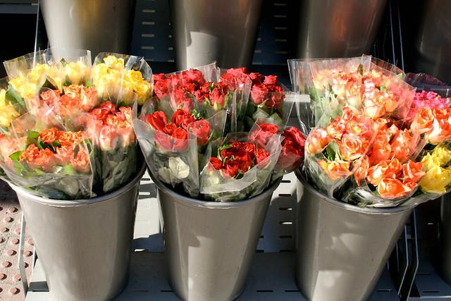 Elige una rosa que te la regalo