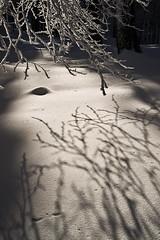 Luces y sombras de invierno (inaxiotejerina) Tags: luz nieve sombra invierno navarra nafarroa urkiaga kintoa