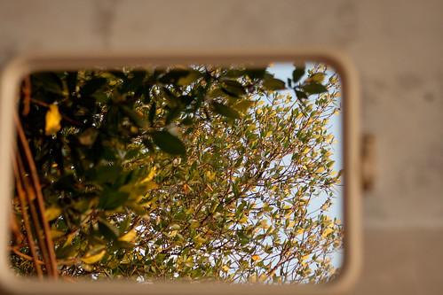 ภาพสะท้อนชีวิตต้นไม้ (หรือจะเถียง).