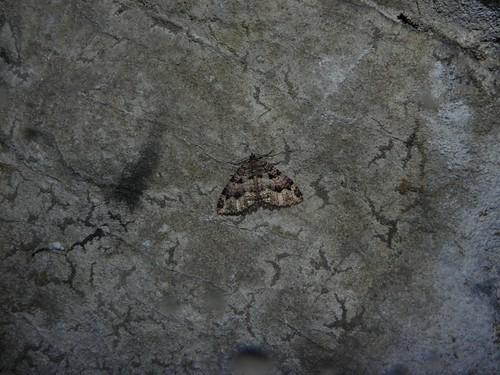 Papillon à la grotte de Banges 033
