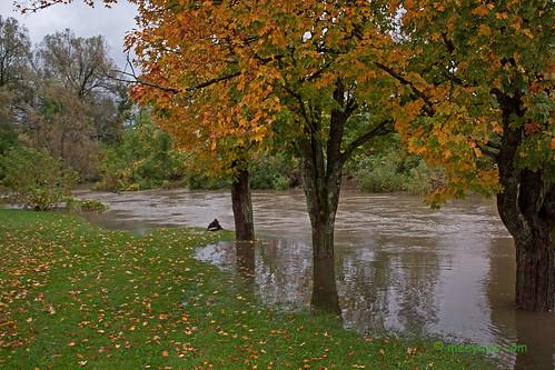 Barton River Flooding    04.jpg