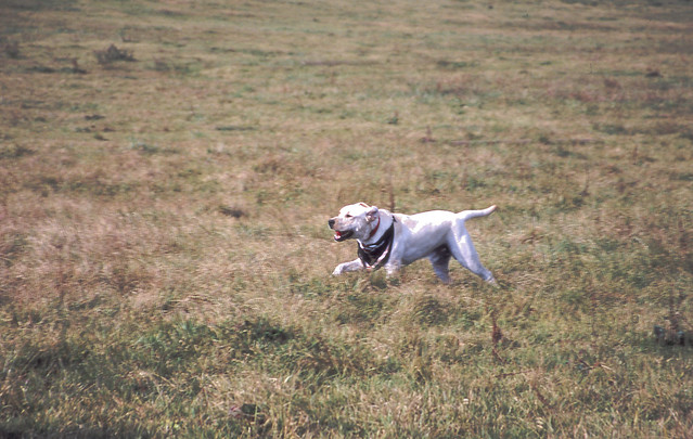 野原と犬のフリー写真素材