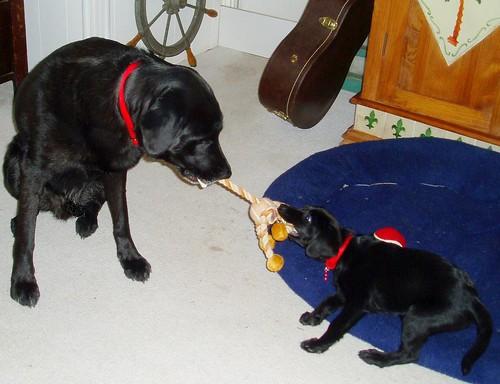 baby maisie and jake
