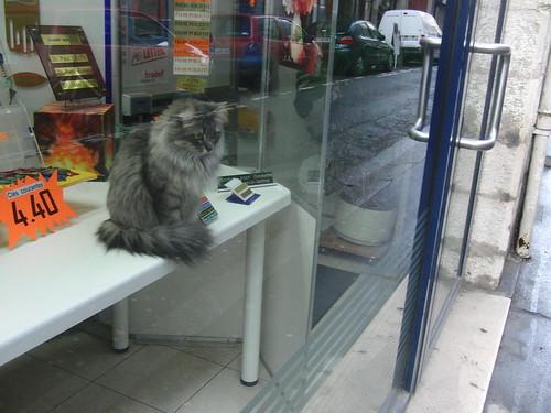 gato en un escaparate de la tienda de llaves