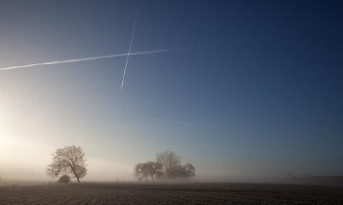 Misty Morning Blue