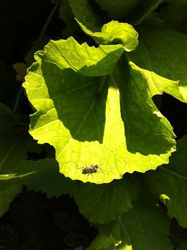 Organic + a Bug