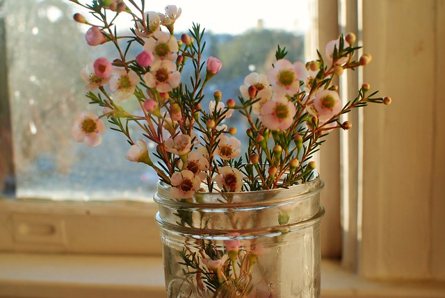 little branchy flowers and morning light