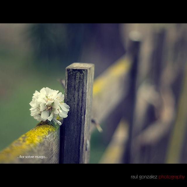 HFF: Flor sobre madera...