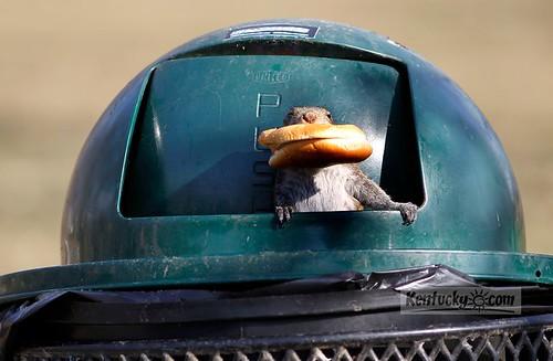 squirrelcanhas
