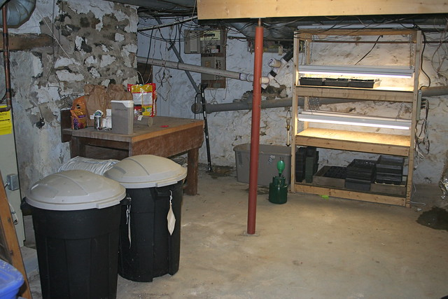 grow stand and potting area in basement of house