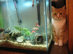 Isabelle and the Fish Tank by spikevicious, on Flickr
