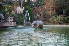 Elephant in the fountain (TSelrahc) Tags: turkey istanbul foutain