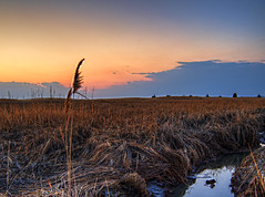 To the End (Chase Schiefer) Tags: sunset sea nature outdoors photography salt marsh hdr highdynamicrange nikond90 saltmarshcordgrass chaseschieferphotography seabreezenewjersey seabreezenj saltmarshnewjersey