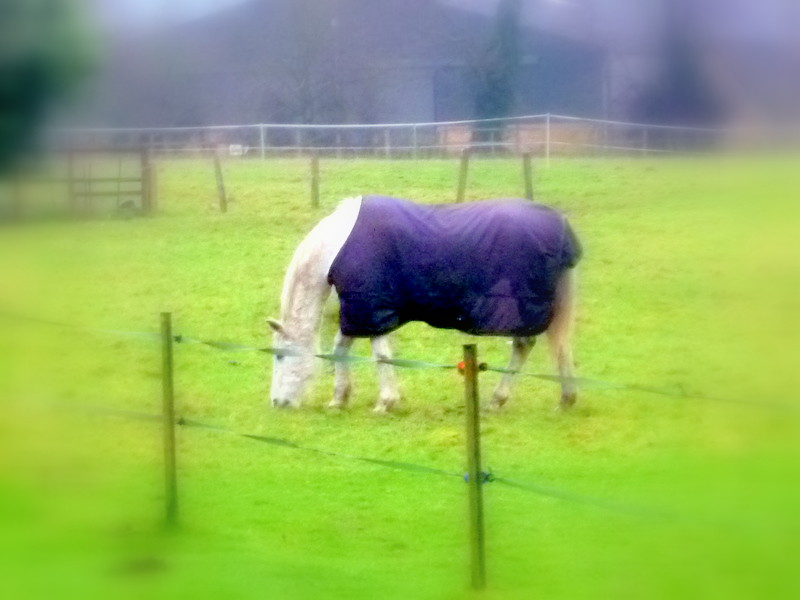 Horse with Rug