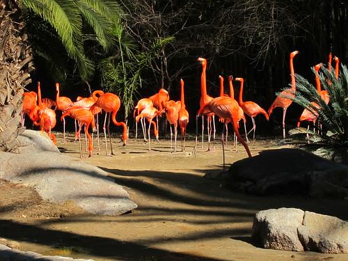 Zoo 02/11/11