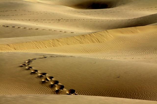 rajasthan desert safari