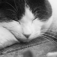 Dolci sogni ((Grazia)) Tags: cats cute animals canon eos kittens felini felines gatti animali dolci 1000d