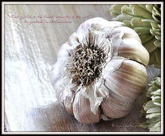 """What garlic is to food, insanity is to art"" (AnnaHwatz) Tags: food macro closeup spice vegetable garlic cloves odc"
