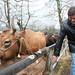 Es imprescindible mantener la base ganadera y agraria de Asturias