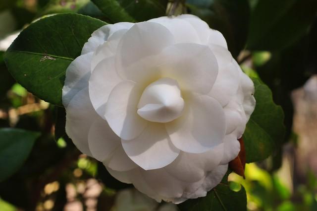 spring colors week--white