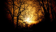 Unmanned World  (yusuf_alioglu) Tags: world trees sunset shadow sky orange sun sunlight black macro colors yellow forest plane turkey dark photography photo fantastic peace photographer earth trkiye dream panasonic anatolia darkforest gkyz yusuf gnbatm planetearth gne sar unmanned glge orman dnya mydream siyah tokat yellowsky aalar aliolu planetworld darkworld gne alioglu panasonicdmcls80 yusufaliolu yusufalioglu unbornart yusufaliogluphotography weloveyoutom imissyoutom karanlkorman sargkyz unmannedworld insanszdnya
