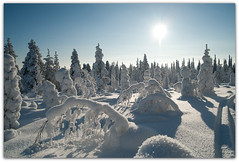Winter in Finland (Habub3) Tags: park christmas travel schnee winter light sky sun white holiday snow plant tree nature backlight forest finland weihnachten landscape licht frozen nationalpark cool flora nikon europa europe finnland walk urlaub lappland natur skandinavien himmel son lapland finnish pascal scandinavia landschaft sonne wald weiss bume baum vacanze reise gegenlicht kansallispuisto spaziergang 2011 viewonblack riisitunturi d700 habub3 riisitunturinationalpark mygearandme
