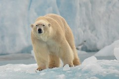 Arctic - Svalvard 207 (Gui61) Tags: norway svalbard arctic spitsbergen
