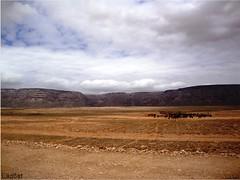 Desebrho 02 (AlMultaqe6) Tags: لقطات socotra طبيعة اليمن سقطرى laq6at نهارية دسبرهو desebrho laq6atbloqspotcom laq6atwordpresscom